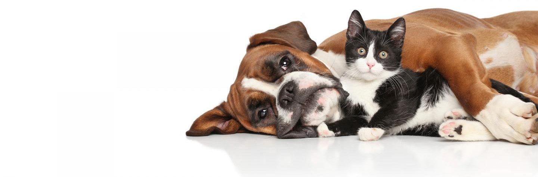 Dales Pets