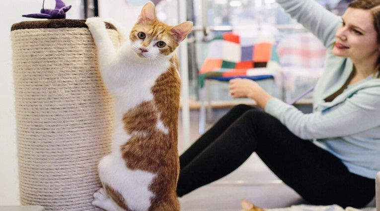 The Best Time to Teach Your Cat to Use the Scratching Post